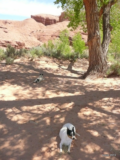We take a break in the shade of another campsite.
