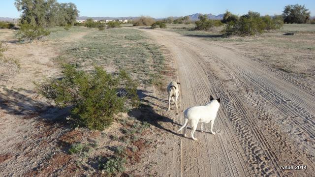 Coyote Wash Wellton Arizona Rvsue And Her Canine Crew